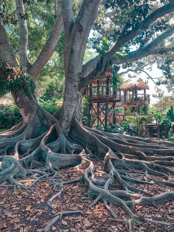 Beautiful trees and little wooden tree houses inside Marie Selby Gardens