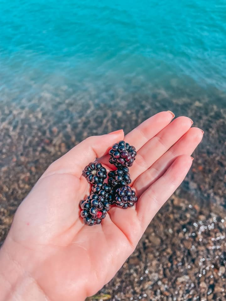 Fresh picked berries by Lake Quinault