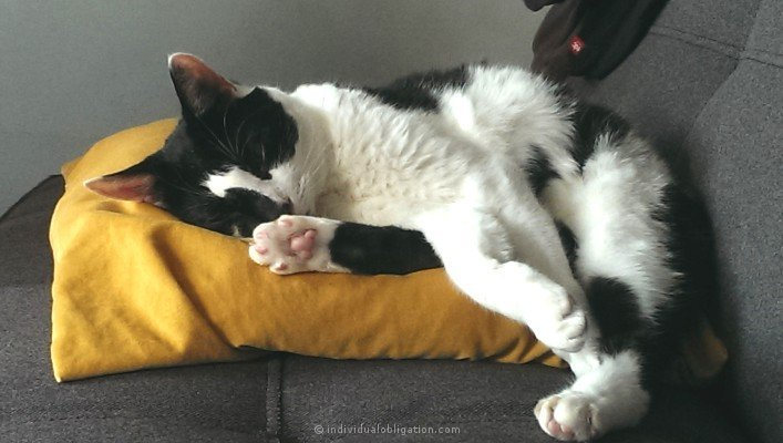 Super cute cat, Spyro snuggling on a yellow pillow