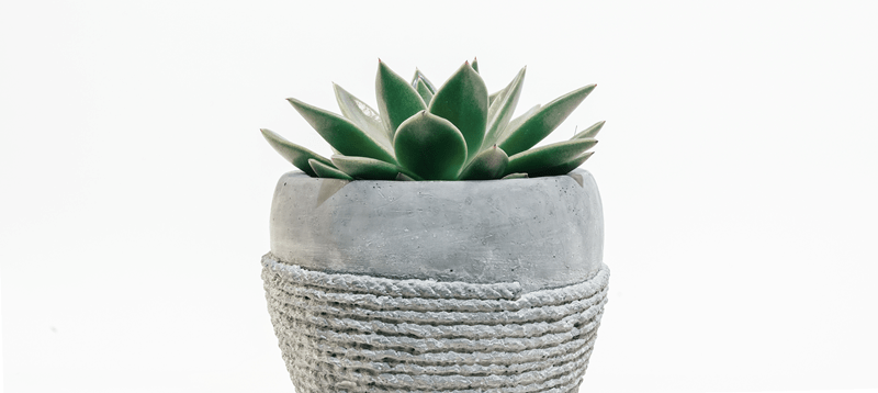 How To Make Money Blogging Heading Succulent Plant In Grey Pot With Twine