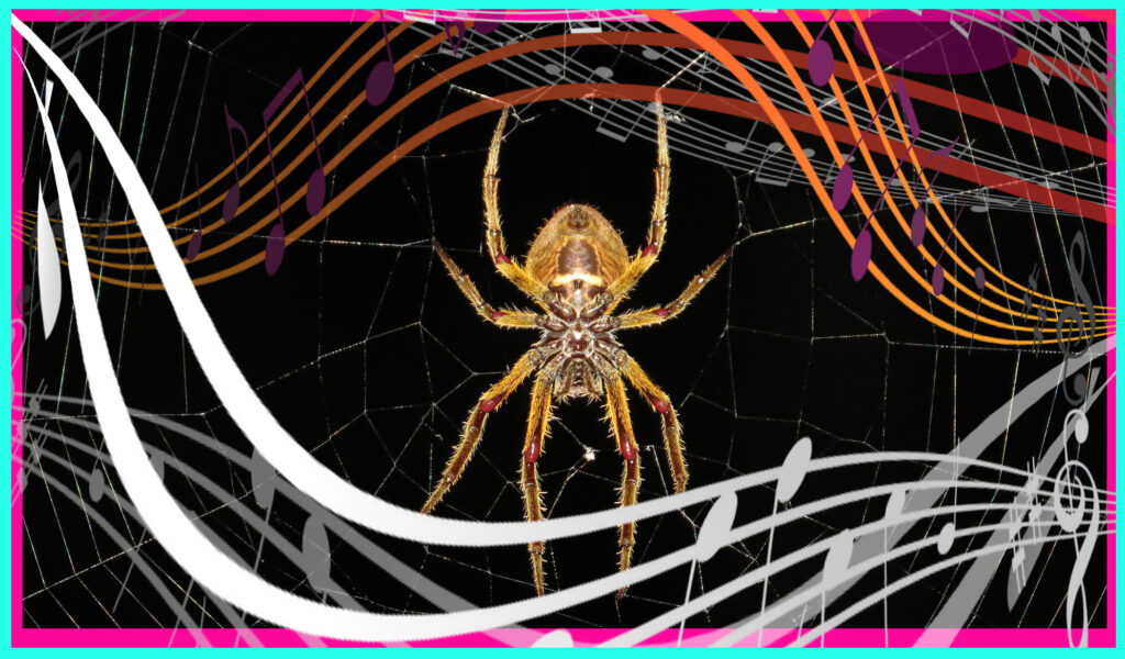 Songs From Nature: MIT Scientist Spin Music Out Of Spider Webs