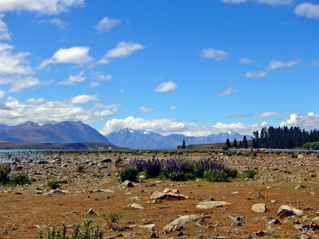 lake tekapo road trip new zealand south island