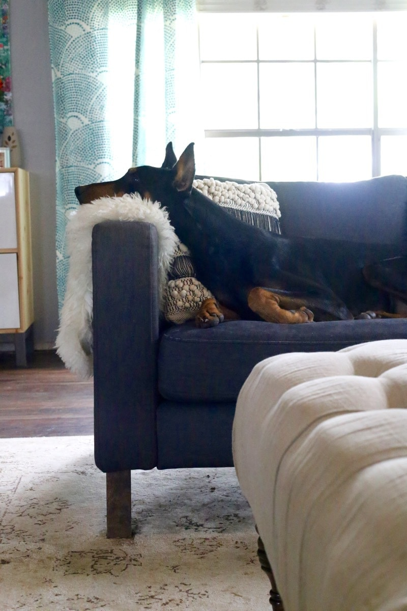 I have such a hard time keeping my house clean between my kids and my dogs - but this post proves it doesn't have to be hard! Stainmaster has a fabulous line of carpet & rug cleaning products, and they'll seriously change your life when it comes to keeping your house clean.