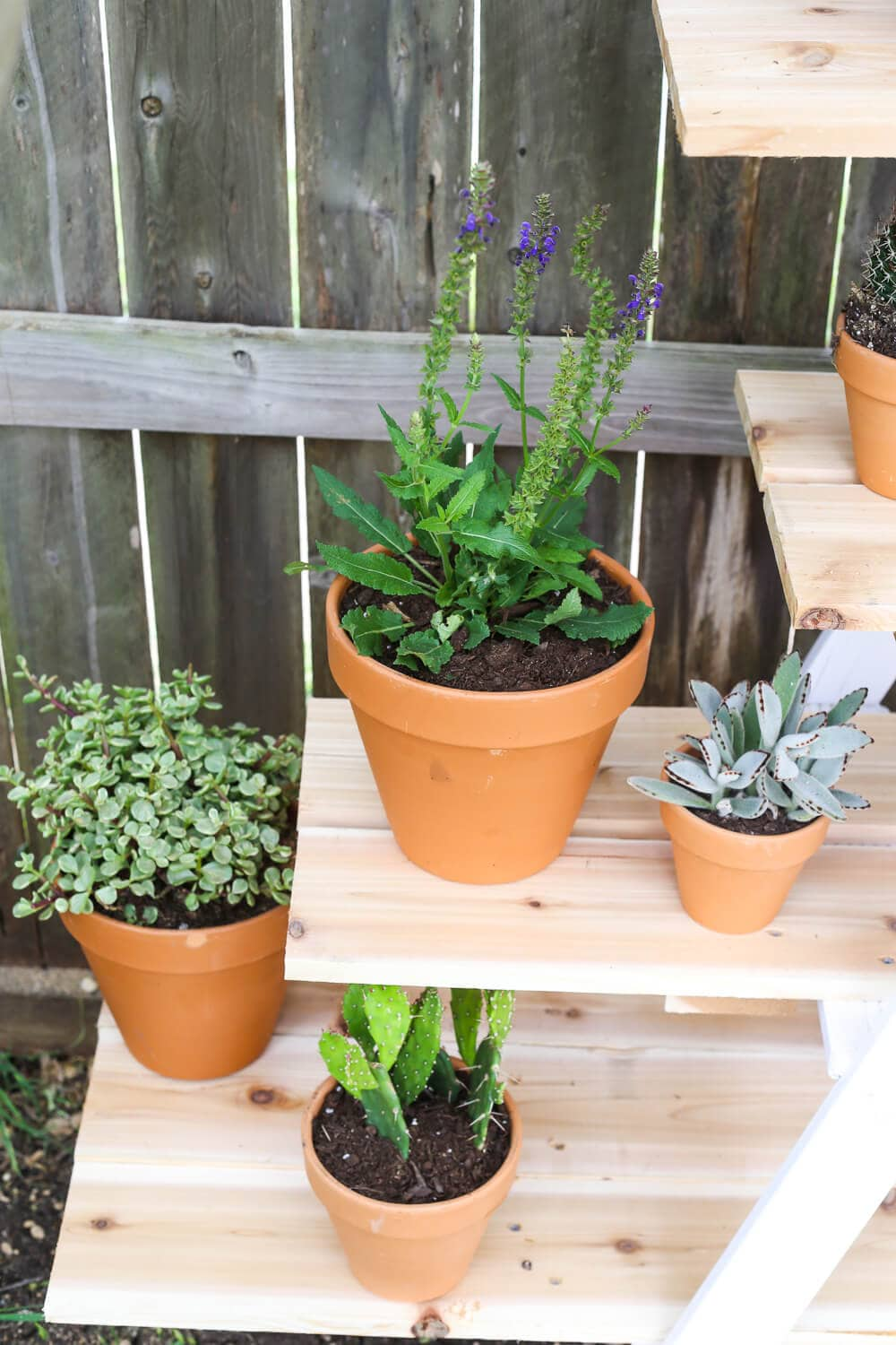 Turn a ladder into a plant stand