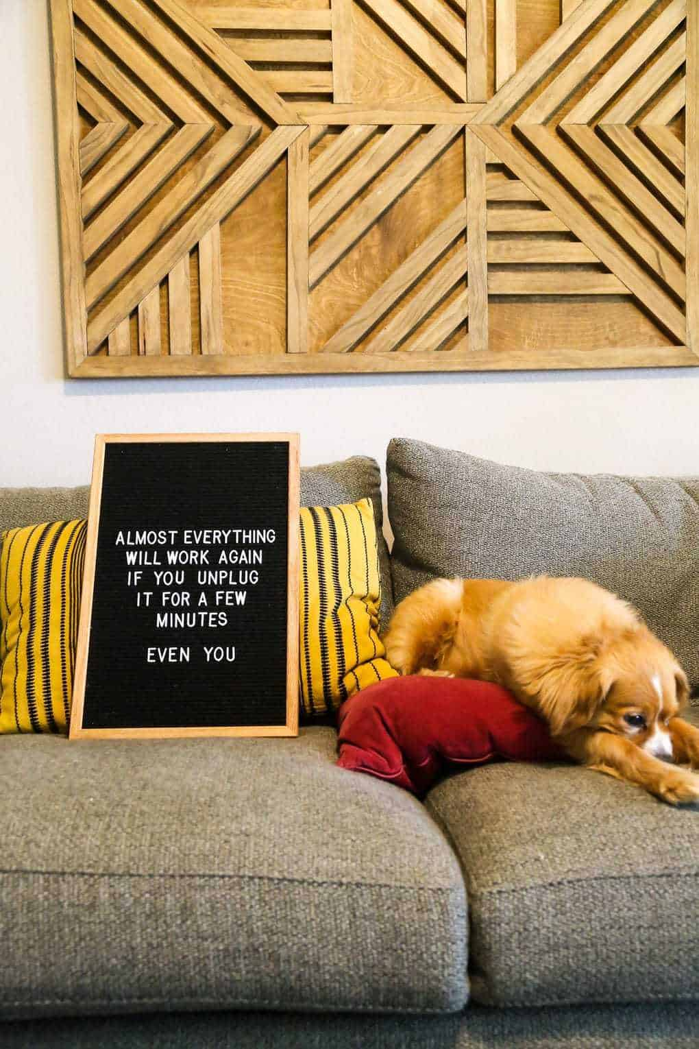 Dog with felt letter board on a couch