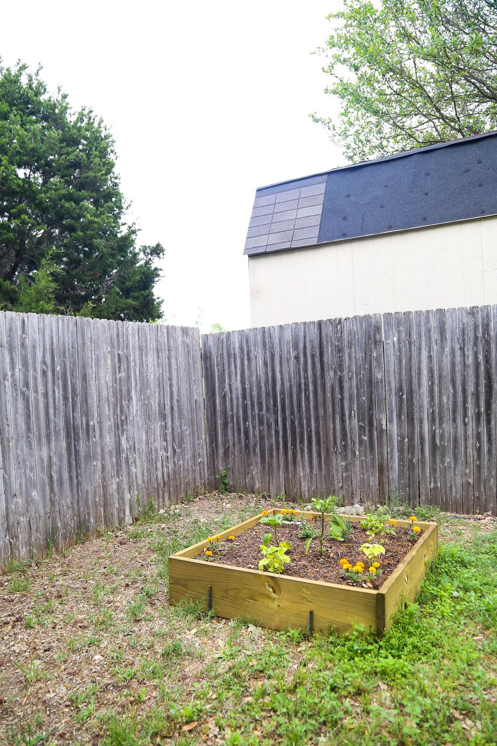 Raised garden bed with square foot gardening