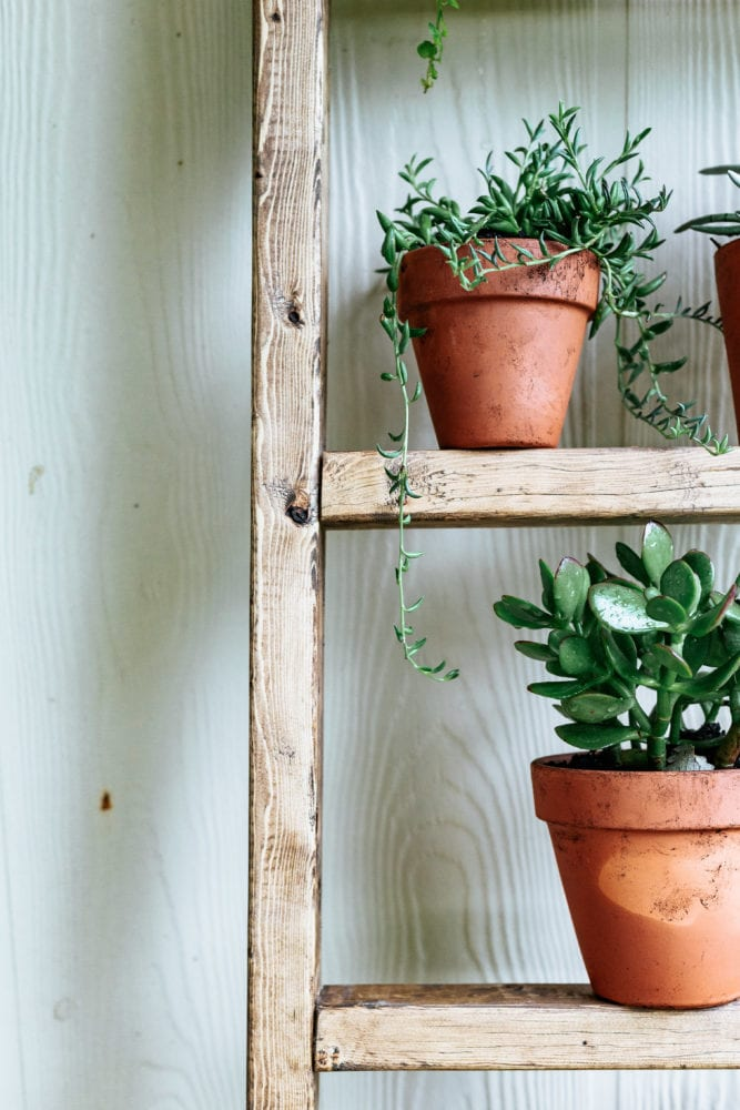 plants on rungs of ladder