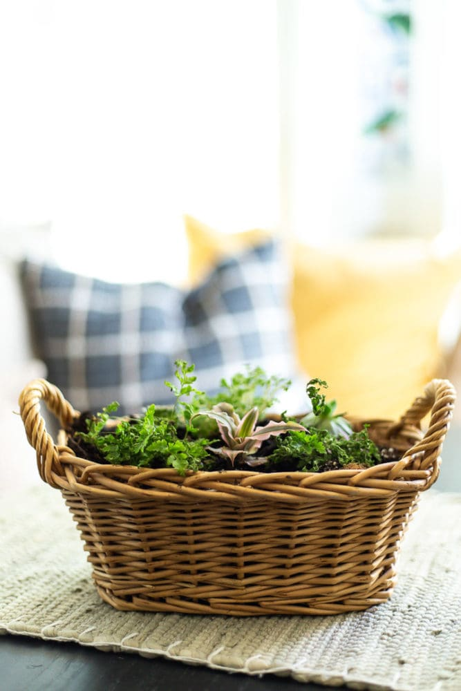 basket with coco liner and plants planted in it