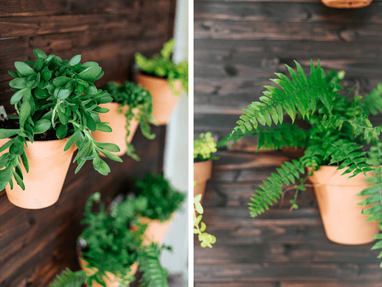 close up of plants on DIY outdoor plant wall