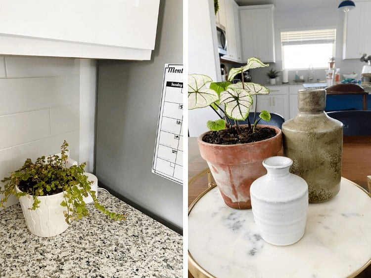 collage of small houseplants