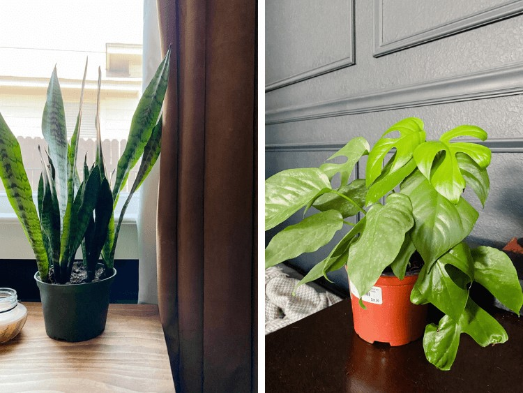 collage of two small houseplants