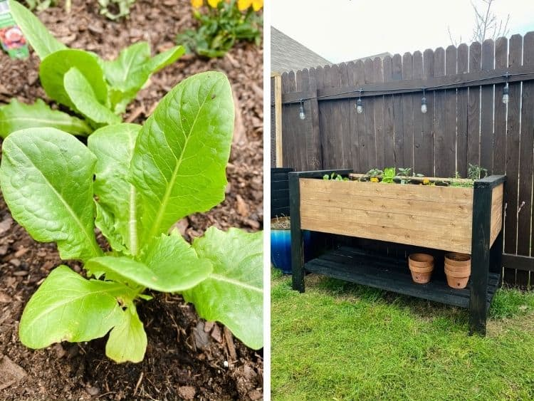 Close-up images of raised garden bed and plants in them
