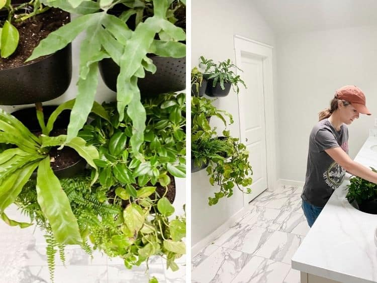 collage of two images. One is a closeup of a plant wall in a bathroom, the other is a woman watering a plant in a WallyGro planter