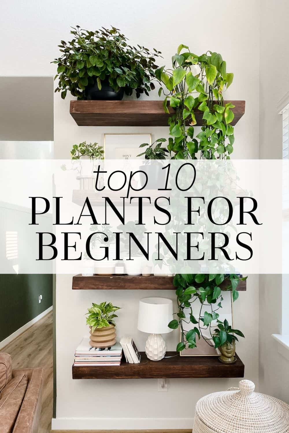 """floating shelves full of houseplants with a text overlay """"top 10 plants for beginners"""""""