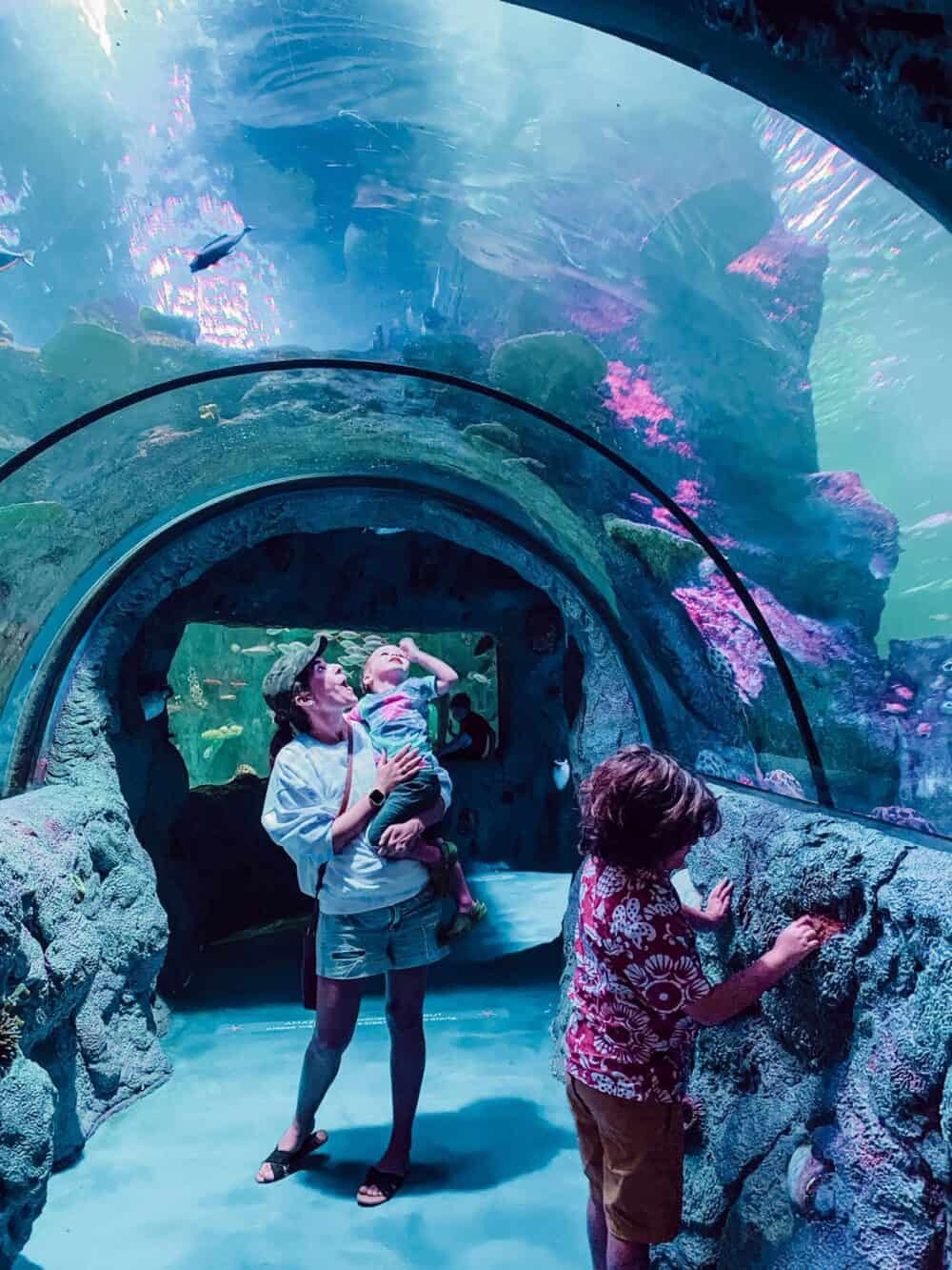 woman and two young boys in a tunnel at SEA LIFE San Antonio
