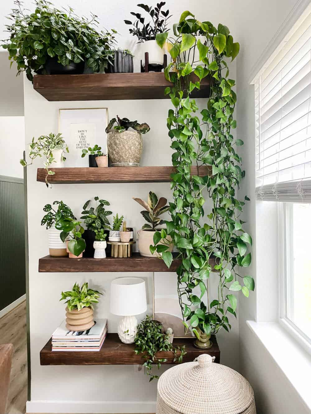A set of floating shelves filled with plants
