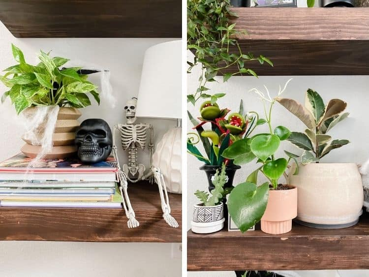Halloween-decorated plant shelves