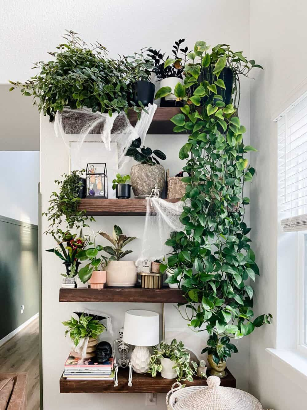 plant shelf decorated for Halloween