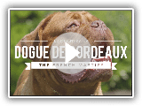 ALL ABOUT THE DOGUE DE BORDEAUX: THE FRENCH MASTIFF