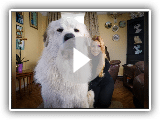THE PYRENEAN MOUNTAIN DOG - DANGEROUS OR PROTECTOR? - Great Pyrenees