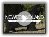 NEWFOUNDLAND FIVE THINGS YOU SHOULD KNOW