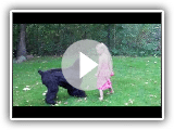 Midnight Solo Black Russian Terrier playing with young girl