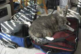 Aphrodite claims the luggage