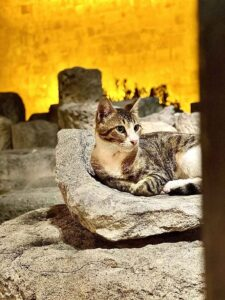 This photograph depicts a Cypriot cat enjoying the Limassol Medieval Castle by night.