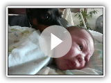 Don't wake the baby! Min Pin guards baby.