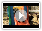 Dogs 101  ~  Portuguese Water Dog
