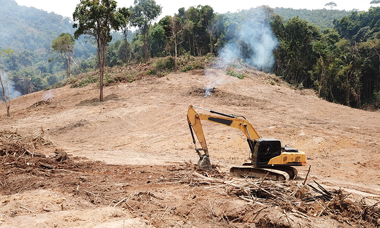 deforestation as a result of palm oil plantations