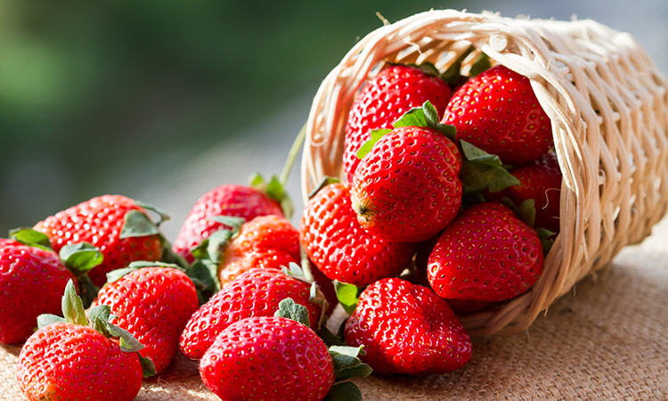 strawberries are commonly grown in the UK