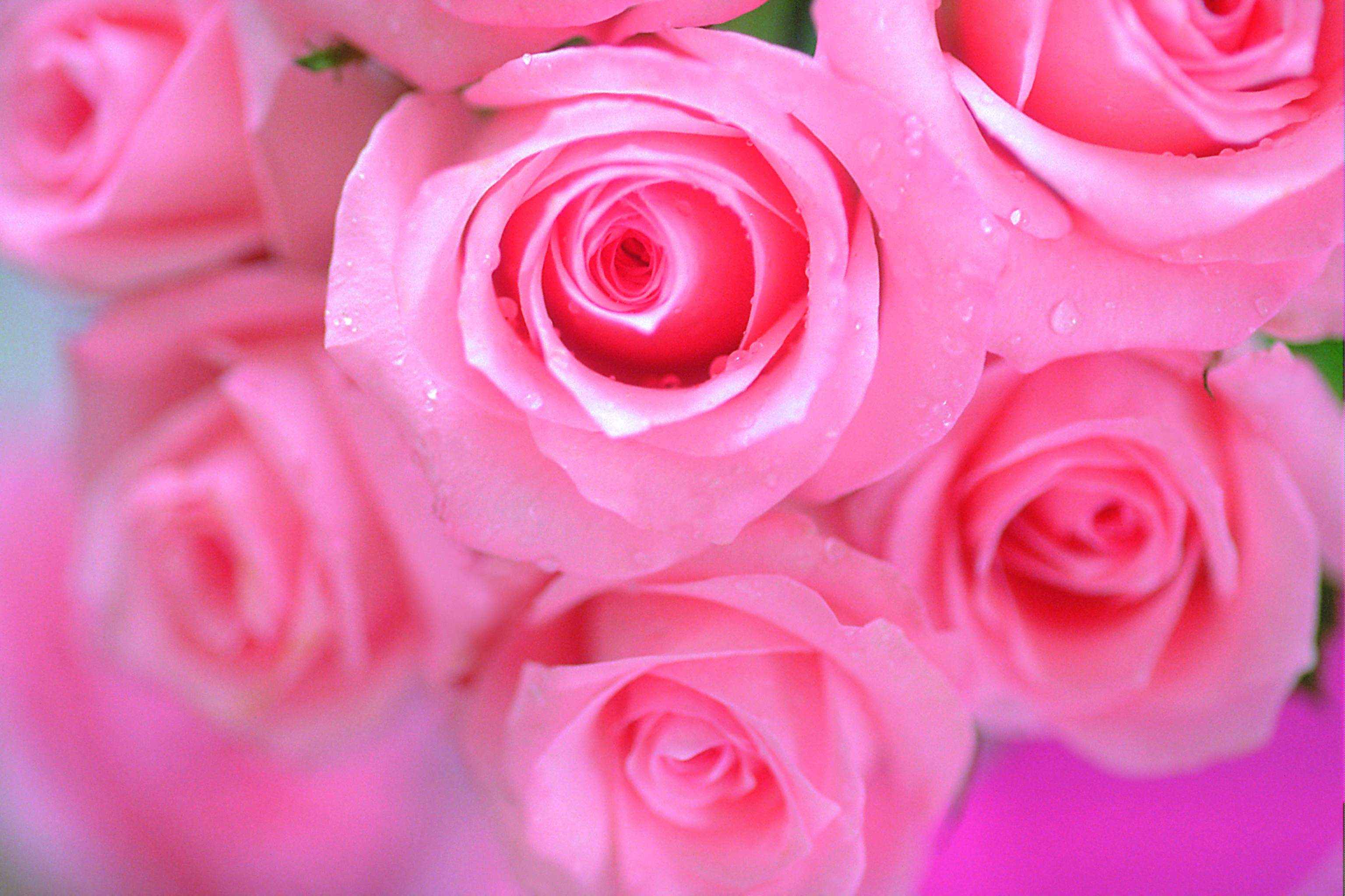 Background Pink Flower Whatsapp Wallpaper Images