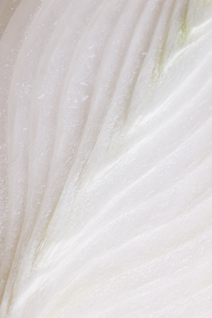 macro shot of white onion