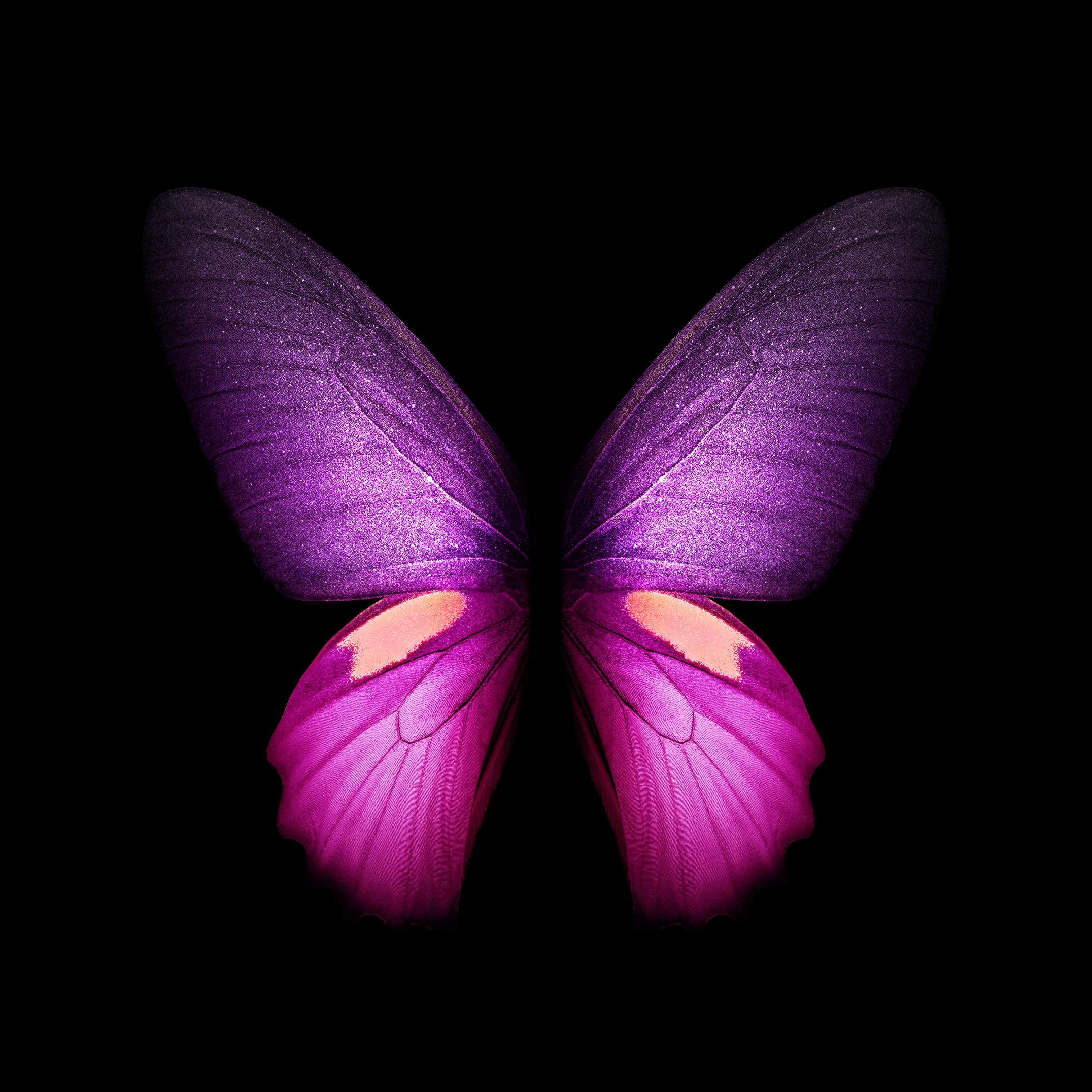 Butterfly Images Hd Wallpaper Download Mp3