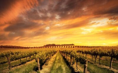 The Best Wine Regions in Australia You Won't Want to Miss