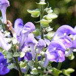 Fight Allergies the Natural Way | skullcap