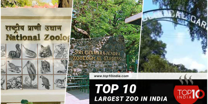 Top 10 Largest Zoo In India