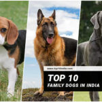 Top 10 Family Dogs In India