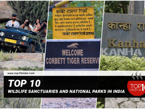 Top 10 Wildlife Sanctuaries And National Parks In India