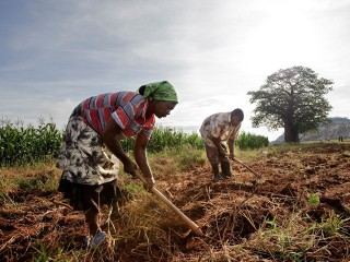 Business potential of smallholder farmers must be unleashed for sustainable development, report says