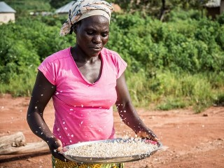 Women in Services Trade: Participation and Ownership, A Sub-Saharan African Focus