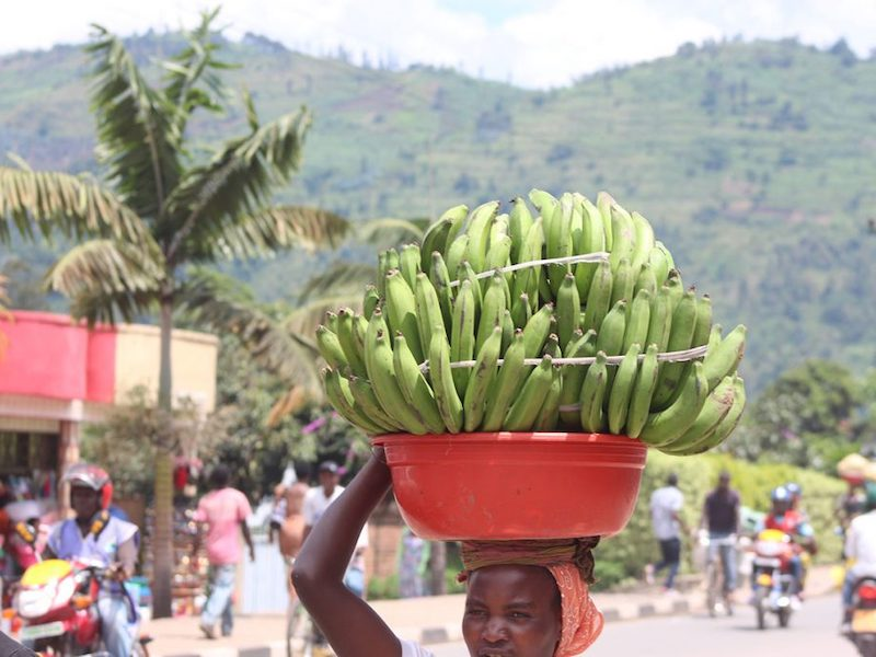 COMESA COVID-19 Food Security and Nutrition Plan adopted
