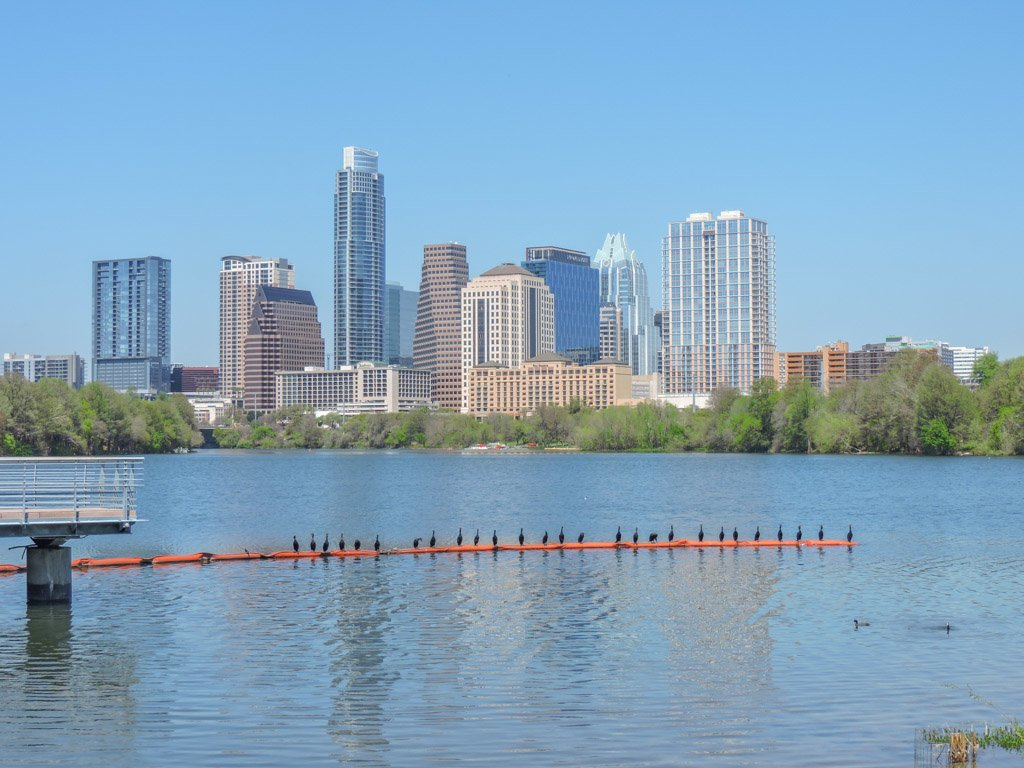 Austin Riverside ducks in sun