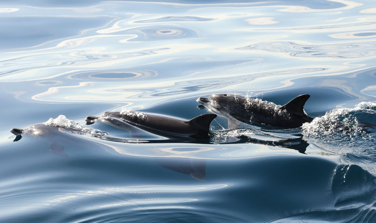 Spain-Tenerife-Whale-and-Dolphin-Watching
