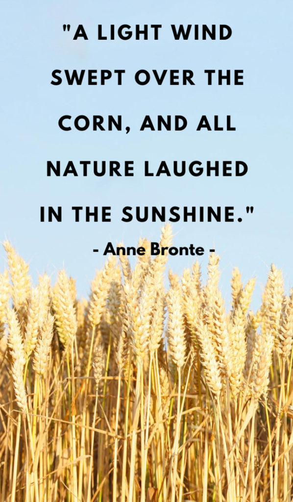 A light wind swept over the corn, and all nature laughed in the sunshine.