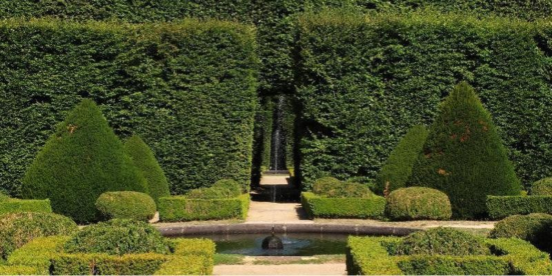 Maintaining Garden Hedges
