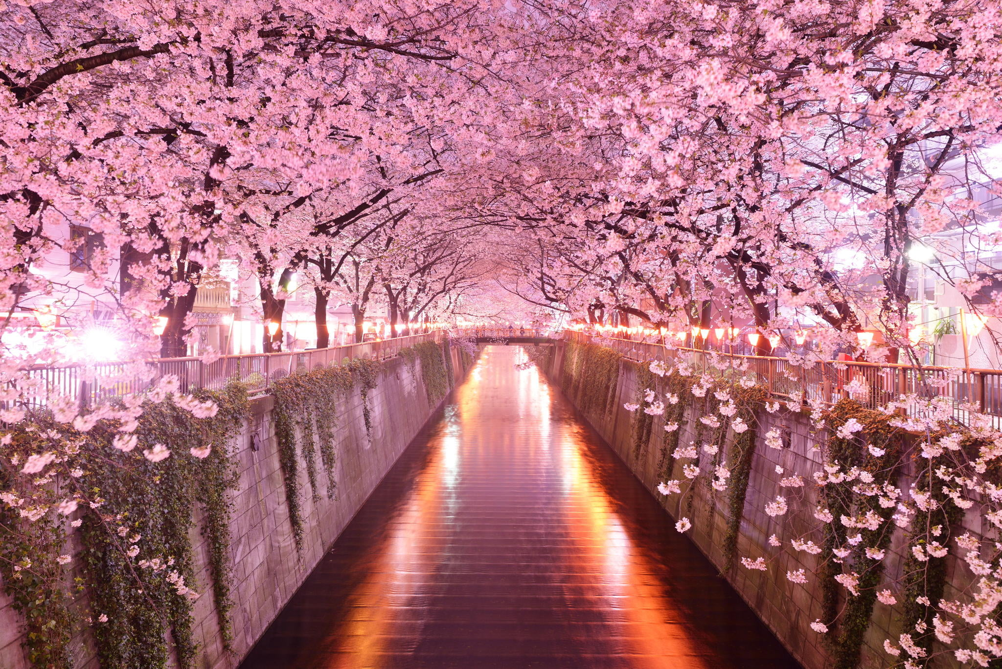 japan architecture cherry blossom pink wallpaper