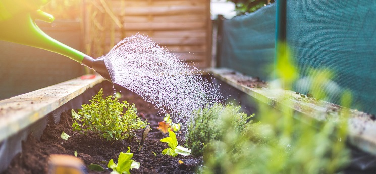 How often should you water outdoor plants as the weather gets cooler?