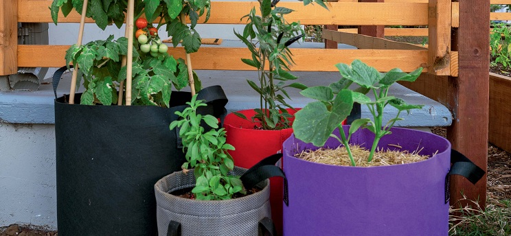 Imaginative ways to use grow bags in small spaces